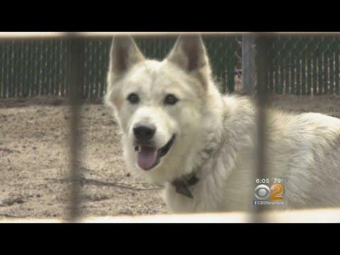New Warning Against Raising Wild Animals As Pets