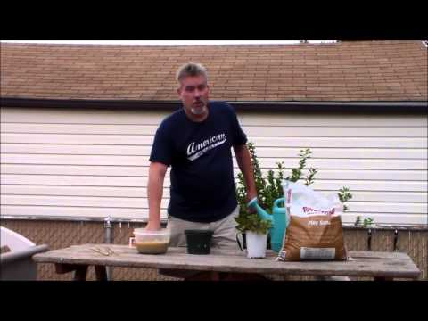 Blueberry plants from cuttings
