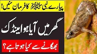 Maindak ( Frog ) Ko Gar Sy Baghany Sy Kia Hota Hai | Hazoor A.S Ka Farman Sunlain | Malumat Tube