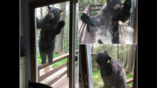 'Angry' bear tries to get into home of woman baking brownies
