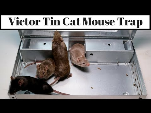 Victor Tin Cat Mouse Trap - Claims to Catch 30 Mice In One Night