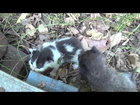 Feral Kittens (