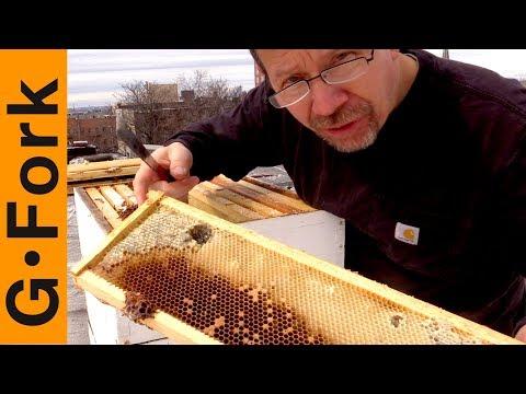 How Did This Beehive Die? Help Me Figure It Out