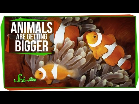 Animals Getting Bigger, and How Cannabis Causes Hunger