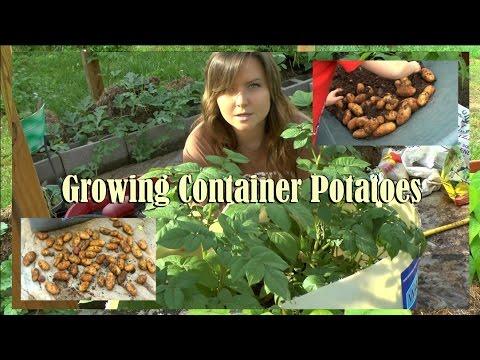 Grow Dozens Of Potatoes In Three Square Feet!