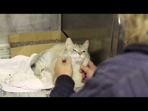 Pocatello Animal Shelter Finds a New Home