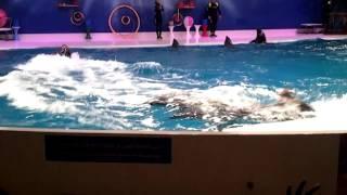 حديقة الخور في دبي عرض الدلافين