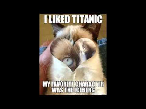 Grumpy Cat Meme Slideshow