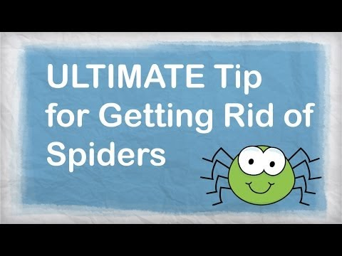 How to Get Rid of Spiders Naturally | BEST Repellent for Getting Rid of Spiders in your House