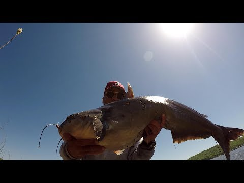 How To Use Live Bluegill For BIG Catfish