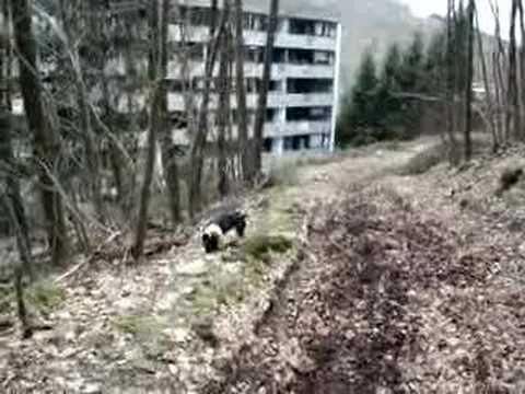 french bulldogg französische bulldogge stitchs crazy runde