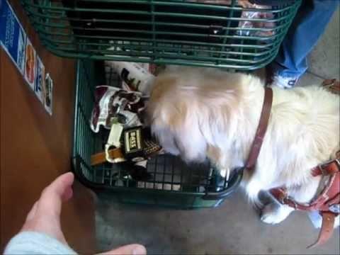 Service Dog Shops for Groceries.wmv