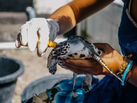 Volunteer Abroad Scholarship - Wildlife & Conservation Volunteering