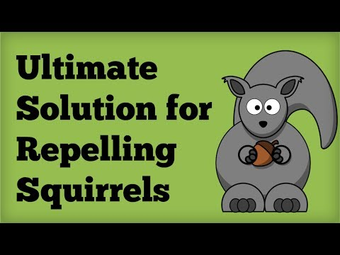 AMAZING Squirrel Repellent! - Best Way to Repel Squirrels Naturally - Repelling Rodents