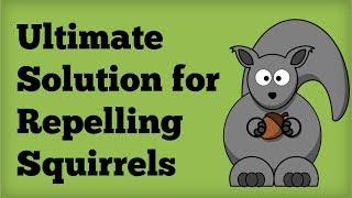 Amazing Squirrel Repellent Best Way To Repel Squirrels Naturally Repe