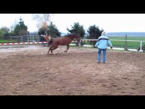 Keep calm and lunge a mad horse.