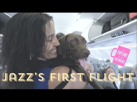 Ana Carttori #Jazz: My puppy's first flight - NYC to Florida -  (Emotional Support Animal)