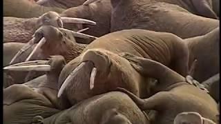 The National Wildlife Refuges of Alaska