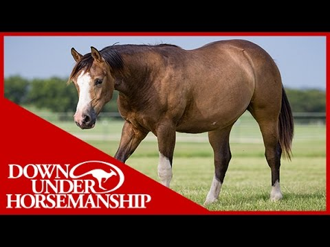 Clinton Anderson: A Useful Tool When Working With a Hard-To-Catch Horse - Downunder Horsemanship