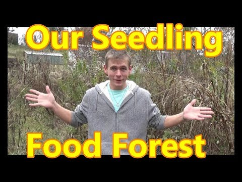 Seedling Food Forest Tour - NEVER SEEN BEFORE!!! A Young Permaculture Food Forest