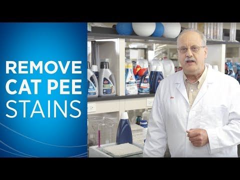How to Get Rid of Cat Pee Stains | BISSELL