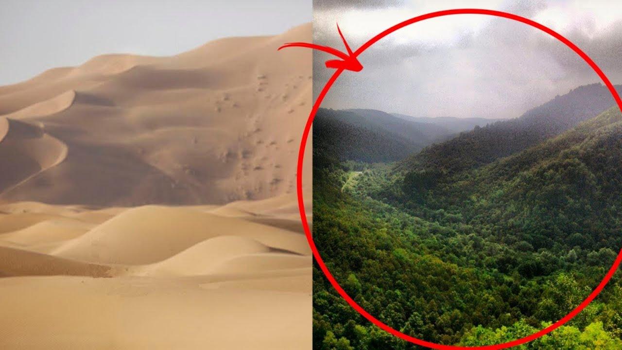 Cómo Los Chinos Convirtieron Los Desiertos En Jardines Florecientes