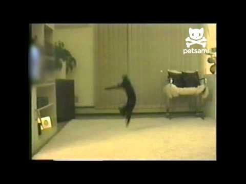 Kitten does a backflip