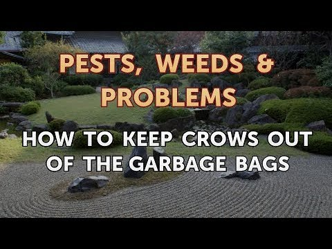 How to Keep Crows Out of the Garbage Bags