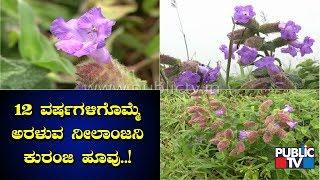 ಚಾರ್ಮಾಡಿಯಲ್ಲಿ ಅರಳಿ ನಿಂತ ನೀಲಾಂಜನಿ ಕುರಂಜಿ..! Neelanjini Kurinji Blossoms Only Once In 12 Years