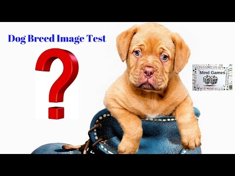 DOG BREED IMAGE TEST CHALLENGE   MATCH THE PHOTO WITH THE DOG QUIZ