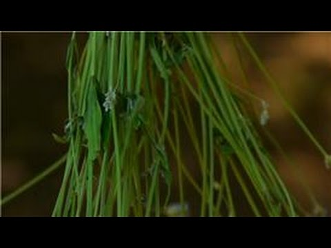 Harvesting & Using Edibles From Your Garden : How to Dry Lavender Leaves