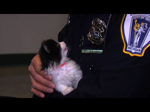 Auditions Held for Troy's 'Police Feline Unit'