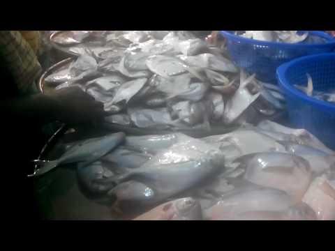 Fresh seafood for sale near me || Fish market near my location || Fresh seafood market