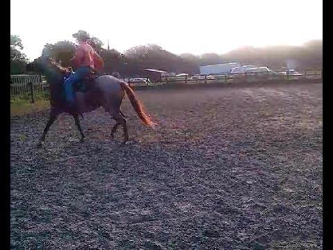 Buddy Sour horse With Mike Hughes, Auburn California