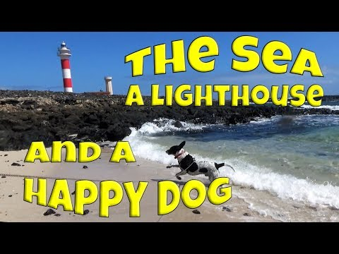 The sea, a lighthouse and a happy dog - A typical afternoon in Fuerteventura