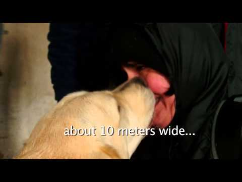 Liron Artzi with Guide Dog Petel -  2013 March of the Living