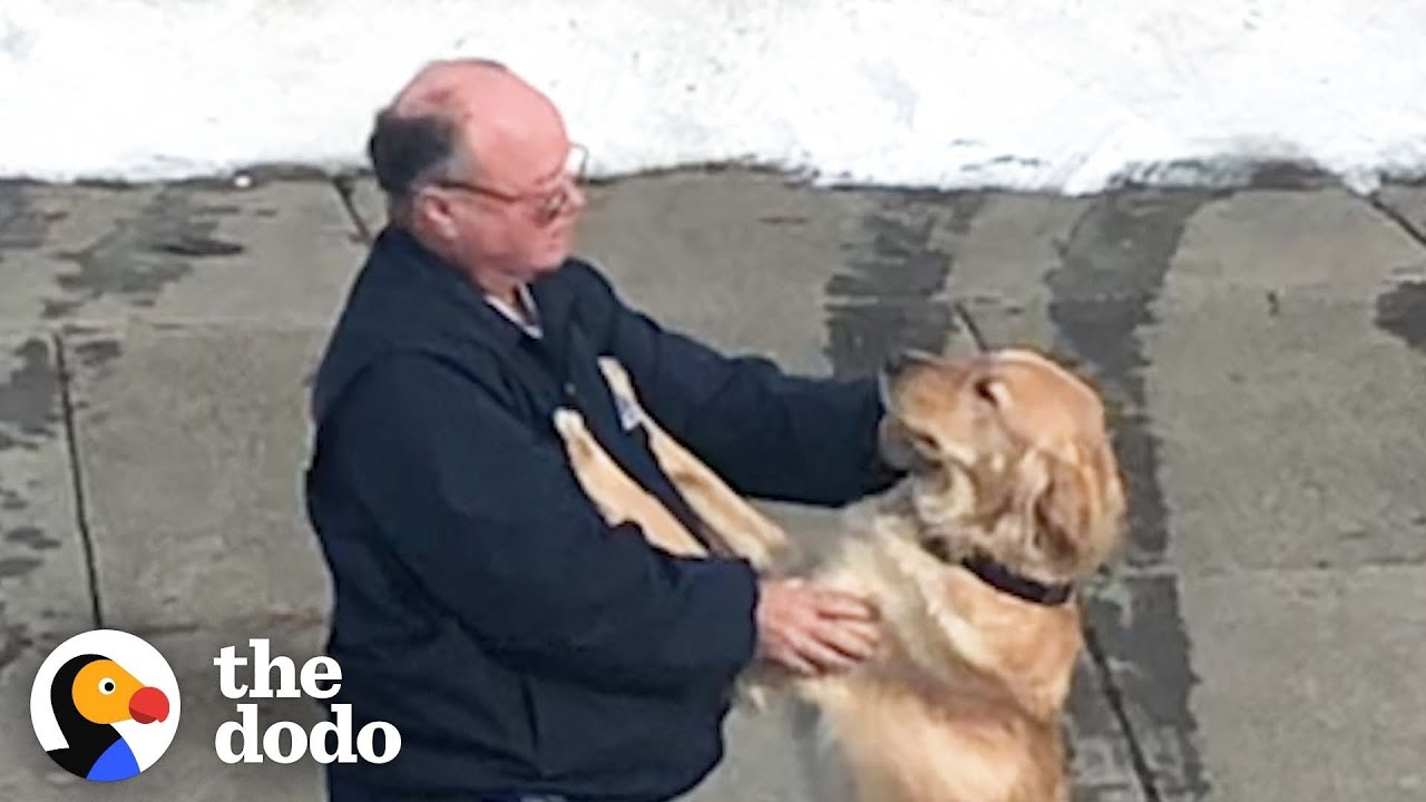Dog And Mailman Have The Sweetest Relationship   The Dodo