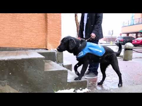 From Pup to Professional: Becoming a Guide Dog