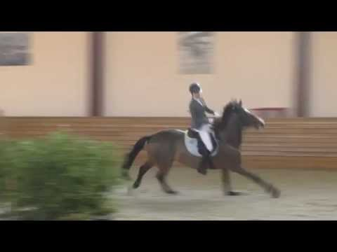 Horse Knocks off Rider and Finishes Competition Alone