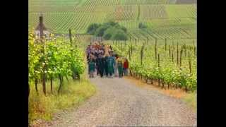 Discover the Art of Making Wine