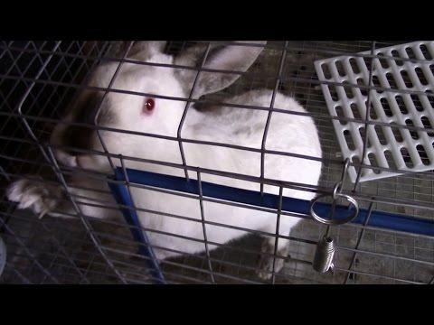 Fur mite treatment update 1/22/15