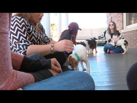 Southern Miss Honors College Helps Students Cope with Stress using Puppies