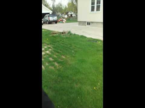 Neighbors dog attacks May 2016