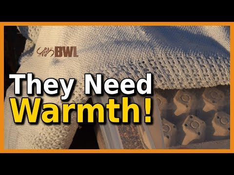 How to Keep Superworms From Freezing