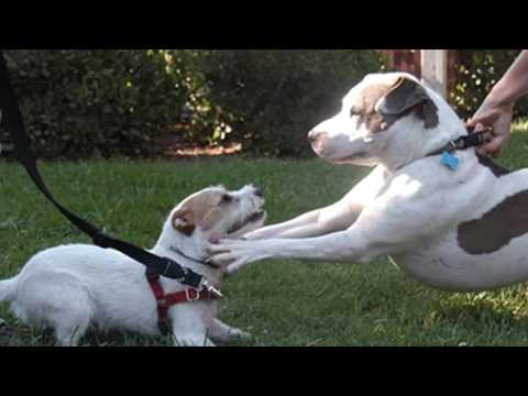 Best Ways To Break Up A Dog Fight.mp4