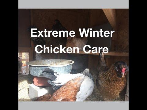 Extreme Winter Chicken Care