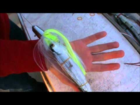 Easy How to rig a Wog with swimming Gar( Ballyhoo) for Spanish Mackerel!!  Best Bait!!