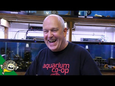 THE CLEANEST FISH ROOM - Master Breeder Dean Angelfish and German Blue Rams plus others!