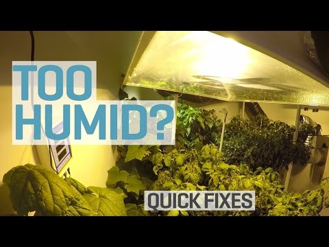 Too Humid in your Grow Room?