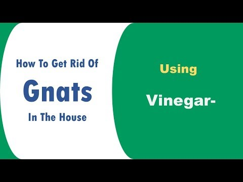 how to get rid of gnats in the house with vinegar